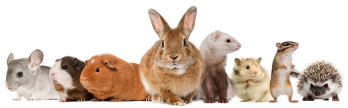 Image result for small animals