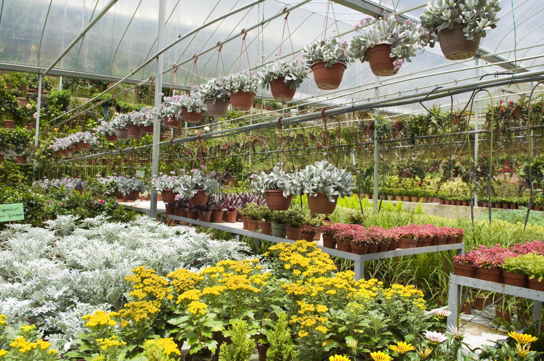afternoon trip to sanders garden world centre september. Black Bedroom Furniture Sets. Home Design Ideas